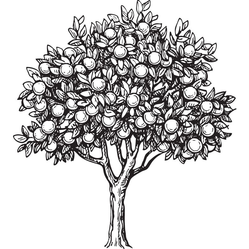 דף צביעה עץ 2