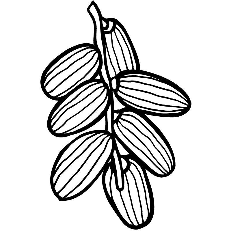 דף צביעה שקדים על ענף
